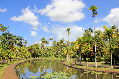 flower green nature water reflections garden palms botanical island maurice ile lilies tropical mauritius pamplemousses 550d sirseewoosagurramgoolam