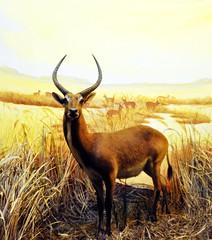 animal, prairie, antelope, springbok, mammal, horn, fauna, impala, grassland, gazelle, wildlife,