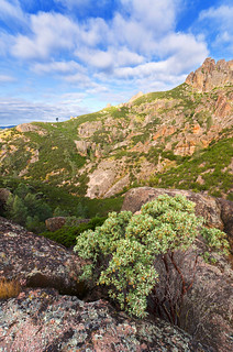 Manzanita Mornin' -- Pinnacles National Monument, Central California