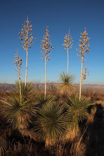 arizona usa landscapes flickr desert unitedstatesofamerica seeds gps succulents 2011 camcanonrebelt3i