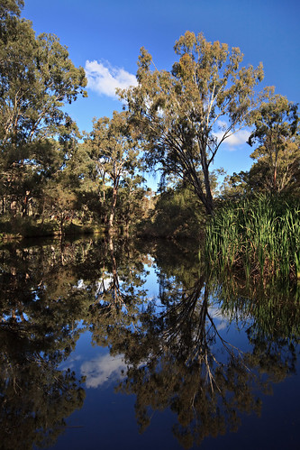 trees reflection water rural creek landscape cows australia qld queensland warwick theglen ironpotcreek