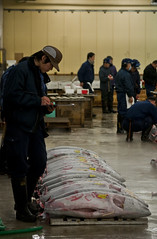 Tsukiji Auction