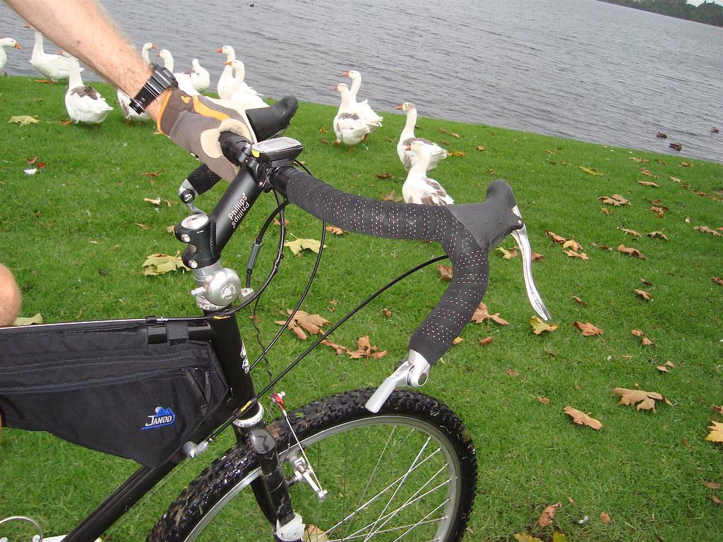 Loose Goose