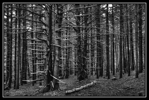 trees blackandwhite bw monochrome dead tennessee northcarolina hdr appalachiantrail deadtrees 3xp photomatix fraserfir carversgap at hdrextremes roanhighlands hdraddicted niksilverefexpro
