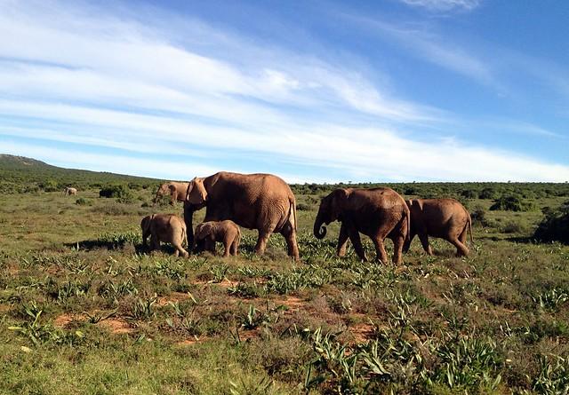 Addo Elephant Park.