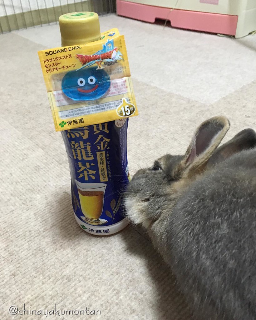 #うさぎ #うさぎのもんたん #rabbit #bunny #もふもふ #ペット #pet #烏龍茶 #黄金 #fluffy #instagood #followme #kawaii #squareenix #lapin #ふわもこ部 #動物 #instabunny #coniglio #petphotography #animallovers #kaninchen #cuniculus #conejo #おまけ #ドラクエ #スライム #dragonwarrior #slime #スクエアエニックス