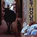 TX-1_e100vs_001 by Zorba the Korean