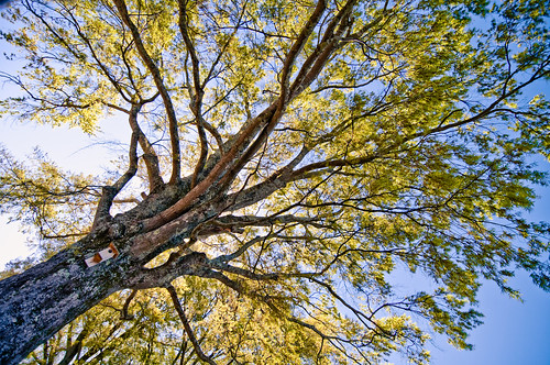 park blue sky sun tree green yellow photography lynne genel glphotography genellynne genellynnephotography