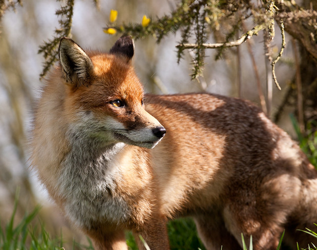 Vixen, Over your shoulder gaze to the horizon, a little pout if you can.