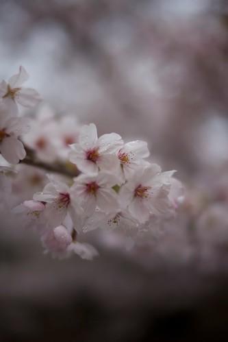 spring ritual