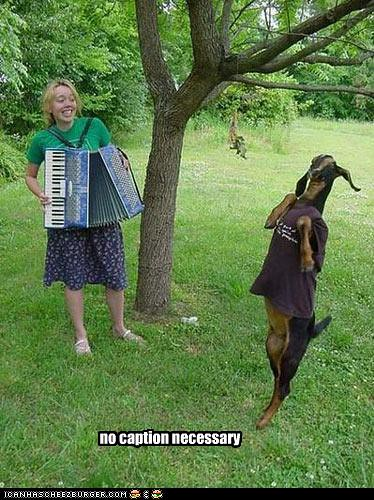 goat dancing to accordion