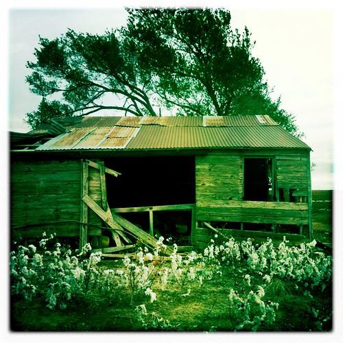 ranch plants west weather metal rural landscape photography texas cloudy farm shed cotton sheet crops