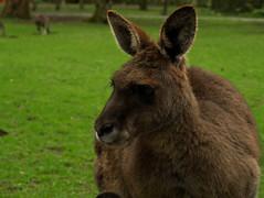 donkey(0.0), wallaby(1.0), animal(1.0), grass(1.0), marsupial(1.0), mammal(1.0), kangaroo(1.0), fauna(1.0), wildlife(1.0),