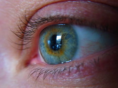 iris, vision care, eyelash, close-up, eye, organ,