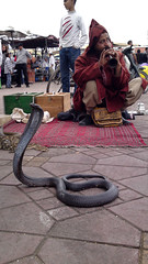 Snake Charmer, Djemaa el Fna, Marrakesh, Morocco