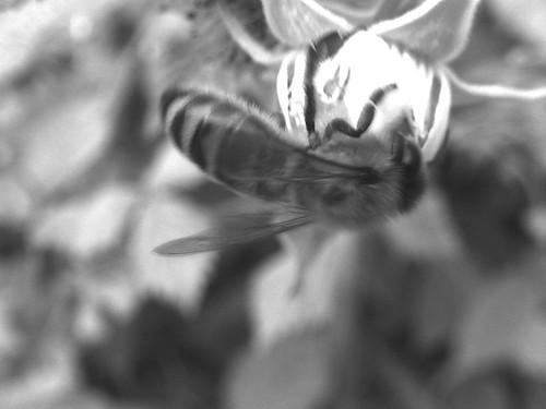 126/365 • bee