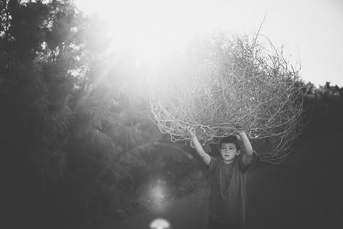 tumbleweed wrangler