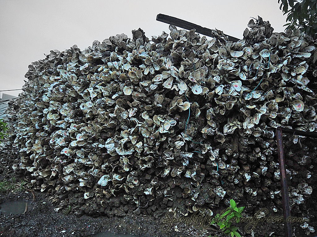 Oyster Wall at Lau Fau Shan