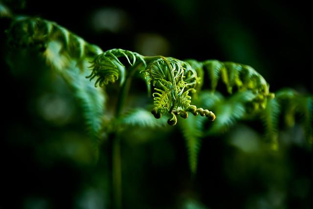 Green /mai #5