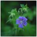 Olympus Flower by Krogen