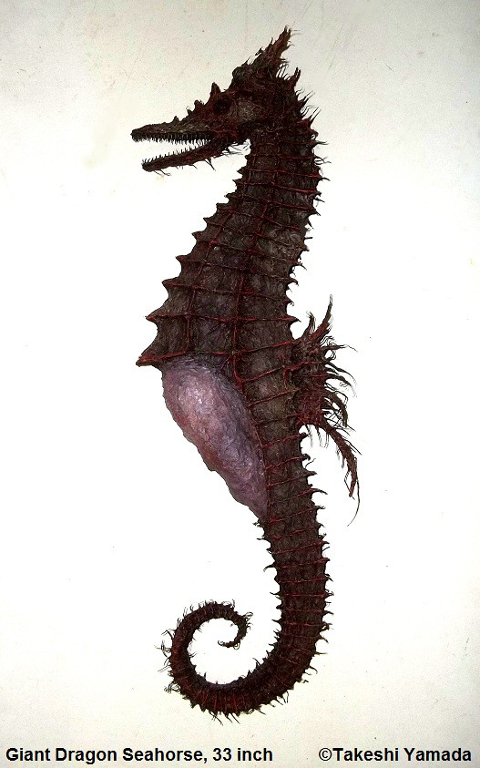 Giant Dragon Seahorse, 33 inch