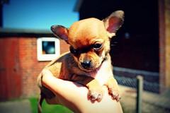 Tiny Coco