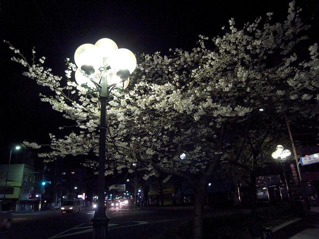 交差点の夜桜