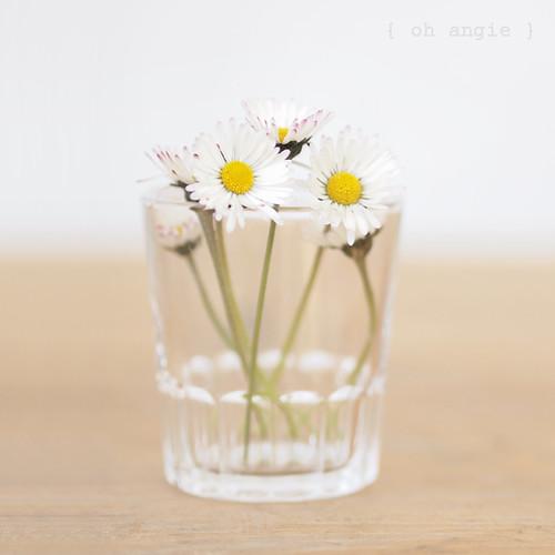 clave alta | daisies 3.0