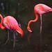 Flamingos Vermelho - Foto: Rê Sarmento