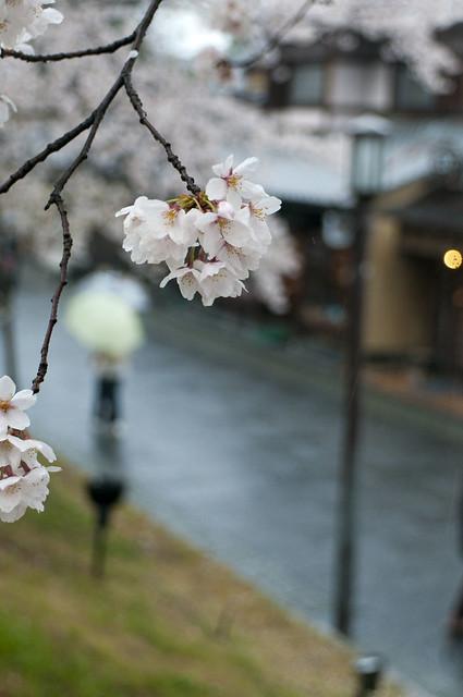 京都 高台寺周辺