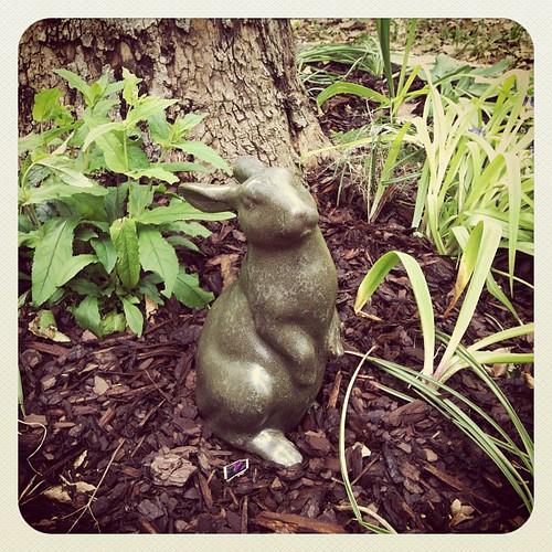 Bunny in the garden.