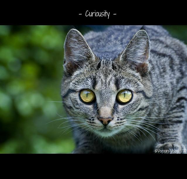 - Curiosity -