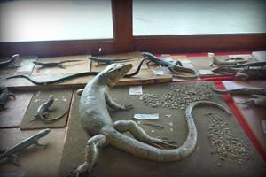 museo-de-la-universidad-nacional-cajamarca