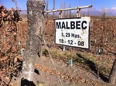 Las últimas añadas del Malbec