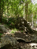 wren-babbler-habitat
