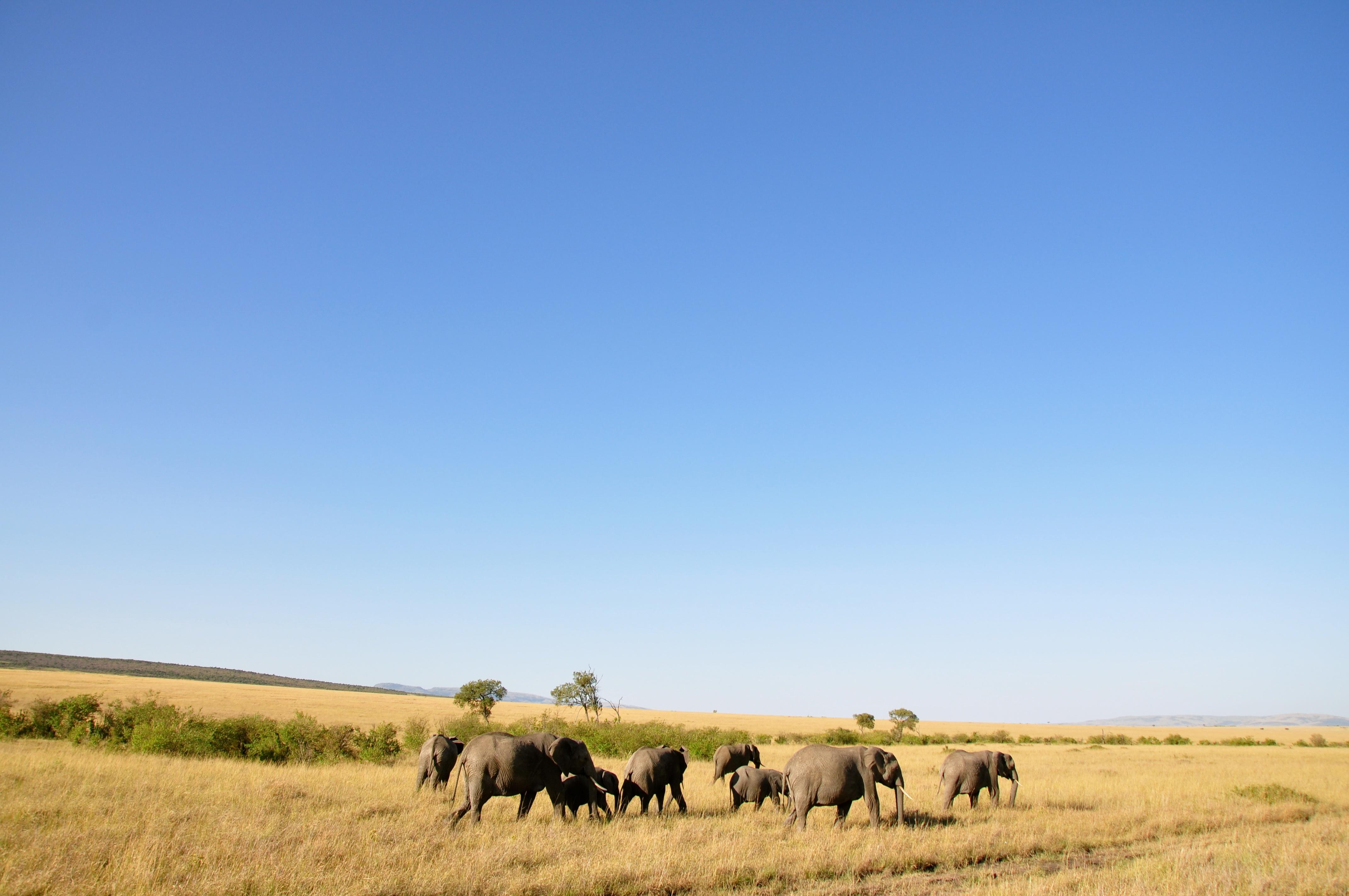 Masai Mara Game Reserve, Kenya  № 3362286 без смс