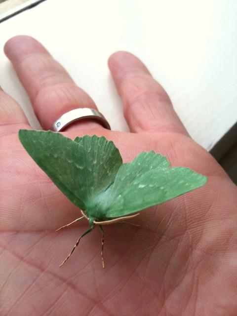 Groene nachtvlinder opzoeken flickr photo sharing - Kleur opzoeken ...