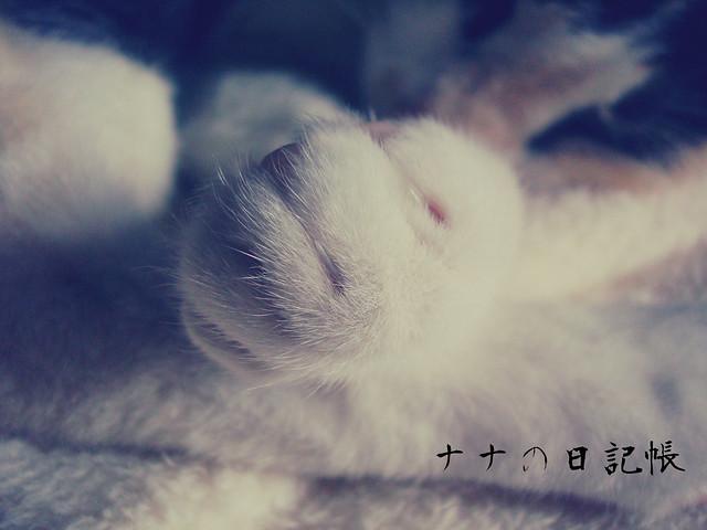 猫の足 1