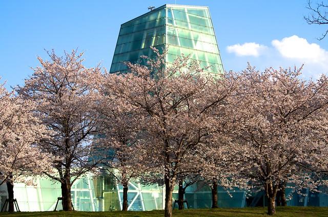 日本工業大学の桜 with PENTAX K-5