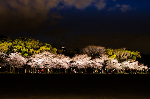 Cherry blossoms at night by hyossie