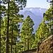 Camino cumbrero