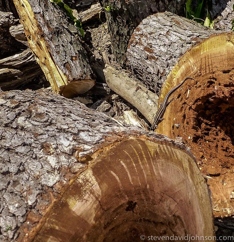 skink habitat, Shenandoah River State Park, Virginia (Lumix TS-3)