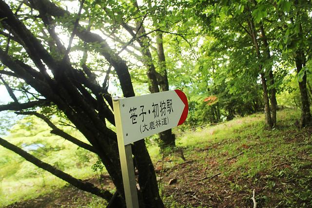 滝子山_38