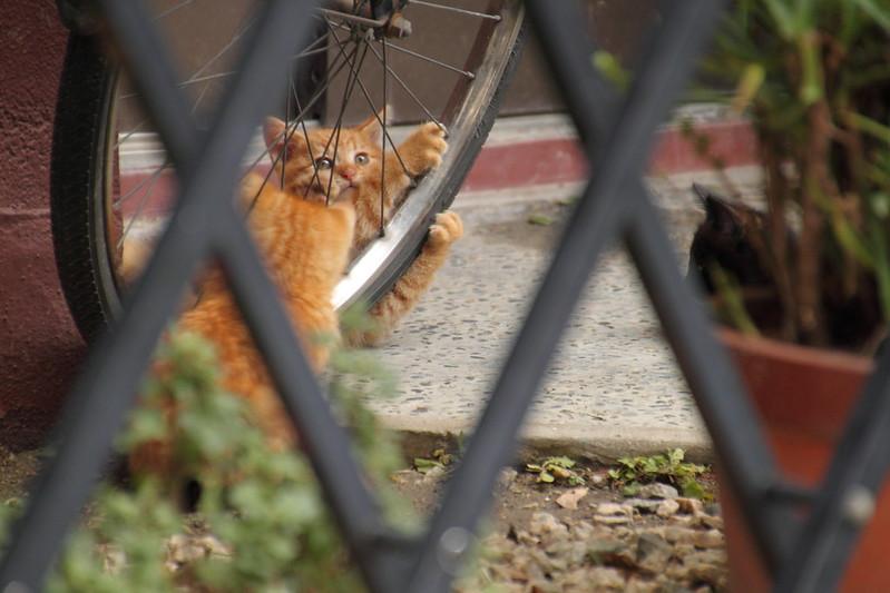 子猫の運動会