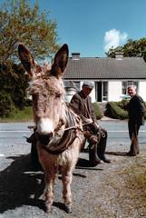 horse(0.0), animal(1.0), donkey(1.0), mule(1.0), pack animal(1.0),