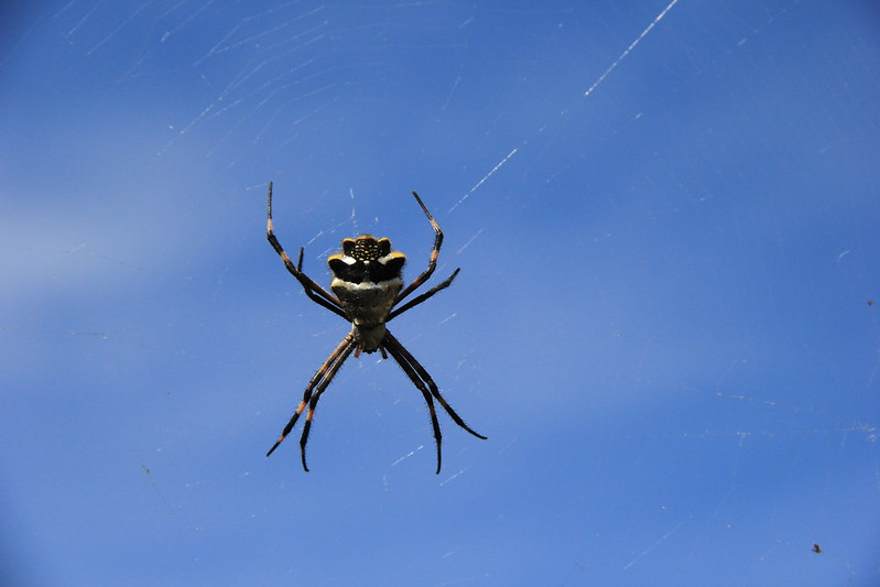 Spider, Wari ruins