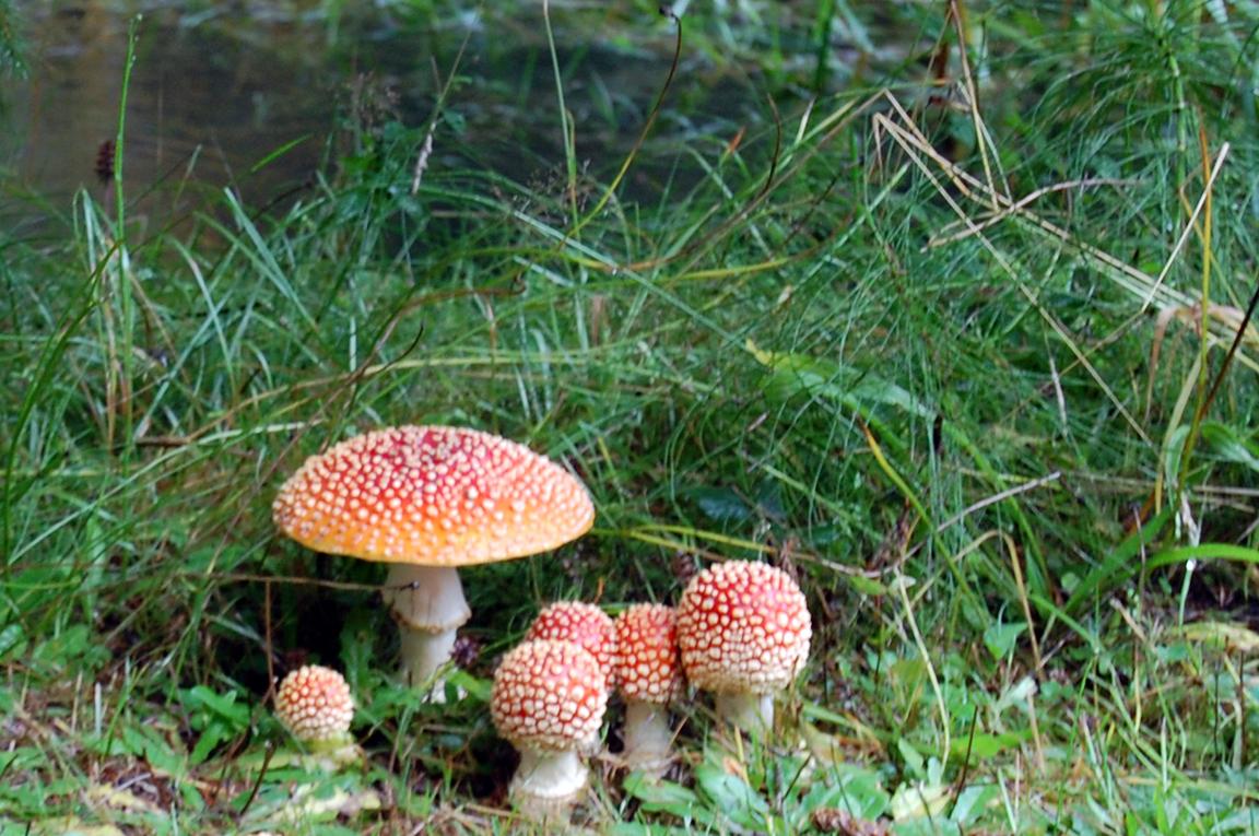 Mushrooms@SeattleThrowback