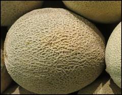 carving(0.0), coconut(0.0), figleaf gourd(0.0), plant(0.0), cucurbita(0.0), gourd(0.0), cantaloupe(1.0), honeydew(1.0), produce(1.0), fruit(1.0), food(1.0), muskmelon(1.0), galia(1.0), melon(1.0),