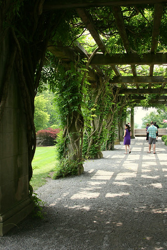 47_wisteria_walk