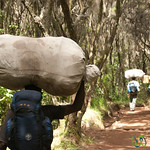 Porters Carry Gear on Head - Mt. Kilimanjaro, Tanzania
